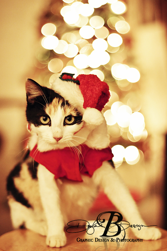 Purrfect Christmas