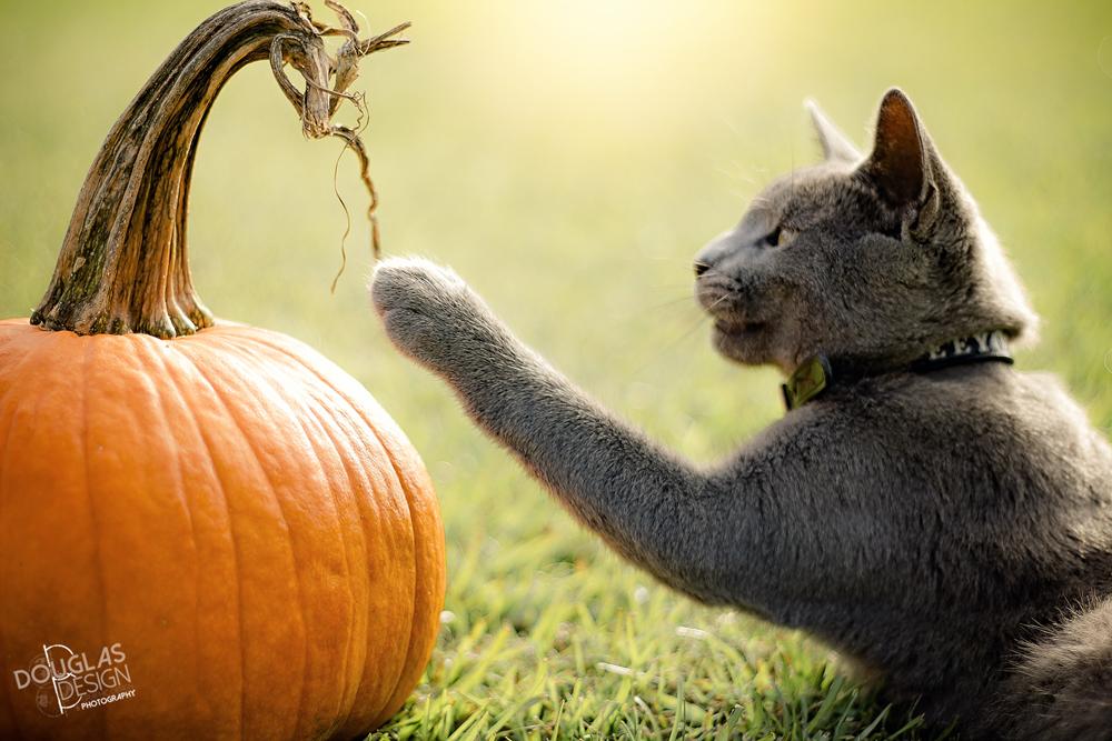 Donkey Boy's First Halloween